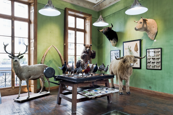 hip paris blog favorite paris spots the magic of deyrolle s parisian taxidermy. Black Bedroom Furniture Sets. Home Design Ideas