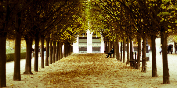Living and working in Paris means you take leisurely strolls through the city's parks, like the Jardin du Palais Royal which is beautiful in the fall with the trees' golden leaves.