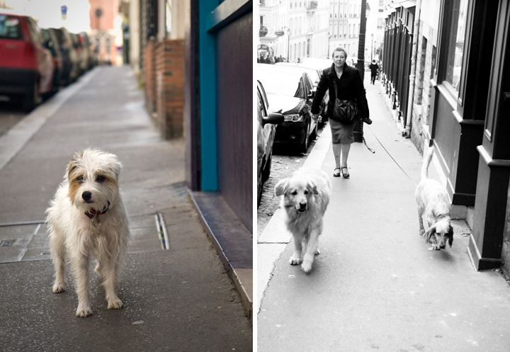 Owning a Dog in Paris, HiP Paris Blog, Photo by Jeff Westo, Katchooo