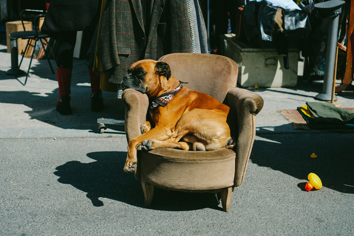 Owning a Dog in Paris, HiP Paris Blog, Photo by Nick Harris