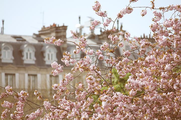 Spring in Paris, HiP Paris Blog, Photo by Rebecca Plotnick 6