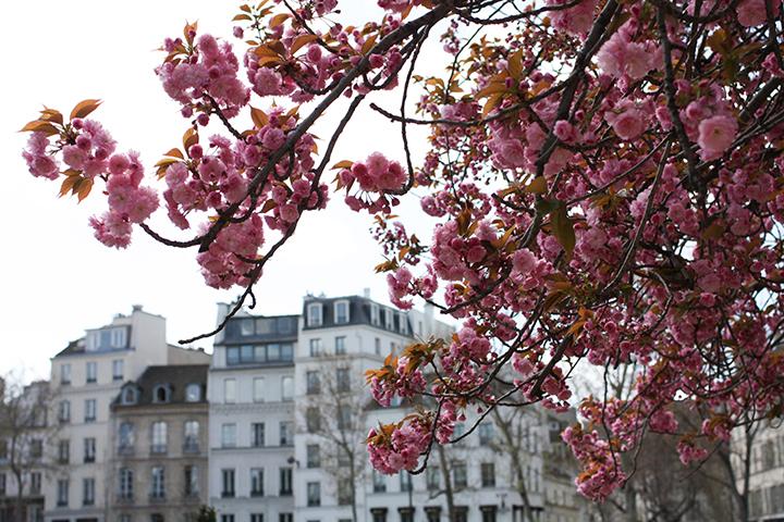 Spring in Paris, HiP Paris Blog, Photo by Rebecca Plotnick