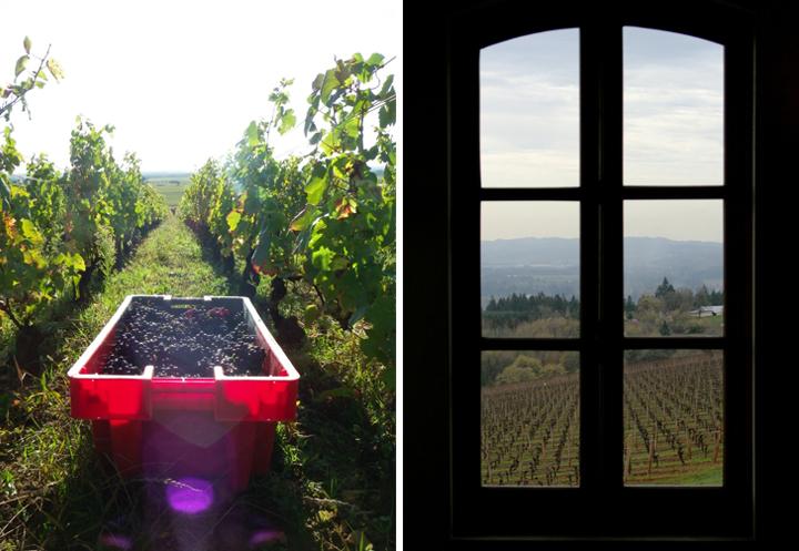 Affordable Wines of Burgundy, HiP Paris Blog, Photo by Domaine Chandon de Briailles, Greg Hirson (Domaine Drouhin)