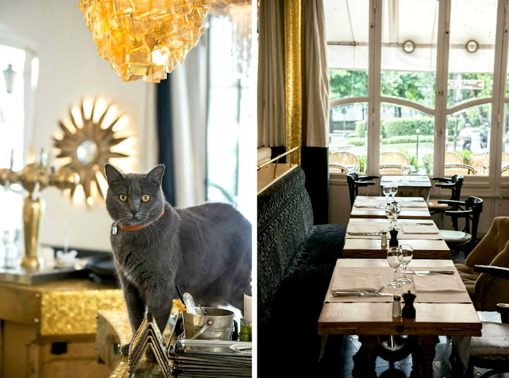 Exploring the Hidden Gems of Paris' Chic 16th Arrondissement, including high-end brasseries like Le Tournesol which has a resident gray cat (left) and cozy banquette seating next to big window (right).