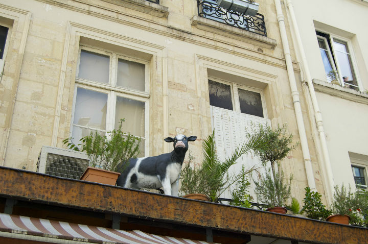 HiP Paris Blog, Isabel Miller-Bottome, Vache