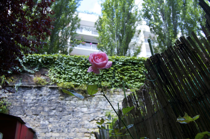 HiP Paris Blog, Flathunters, Isabel Miller-Bottome, Jardin 2