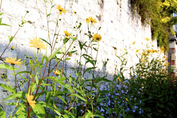 HiP Paris Blog, Van Gogh, Isabel Miller-Bottome, 4