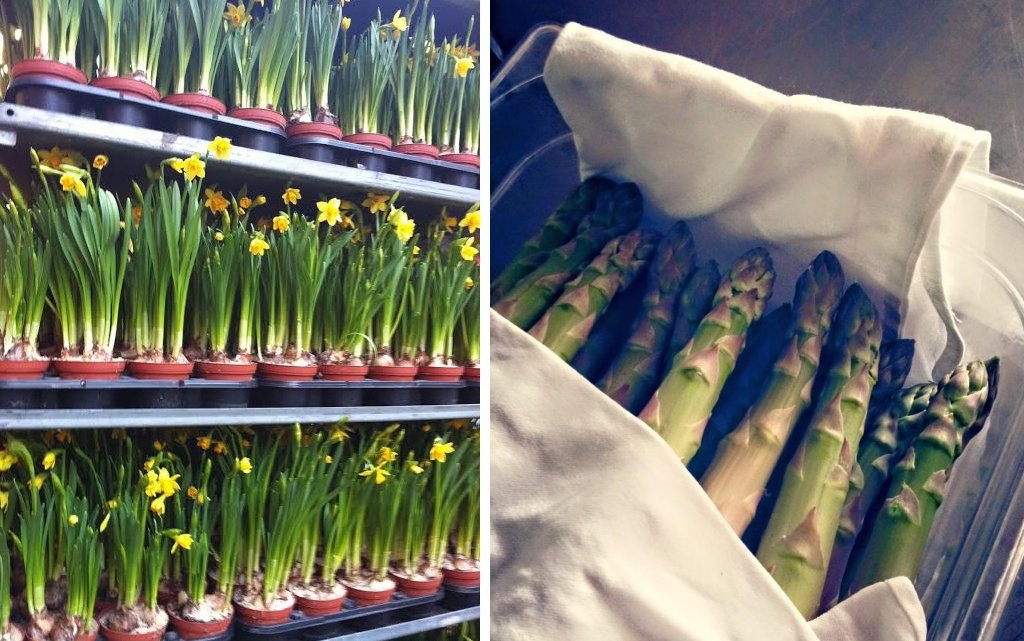 Spring in Paris: Fresh flowers, seasonal fruits and vegetables, bike rides, and picnics in the sun