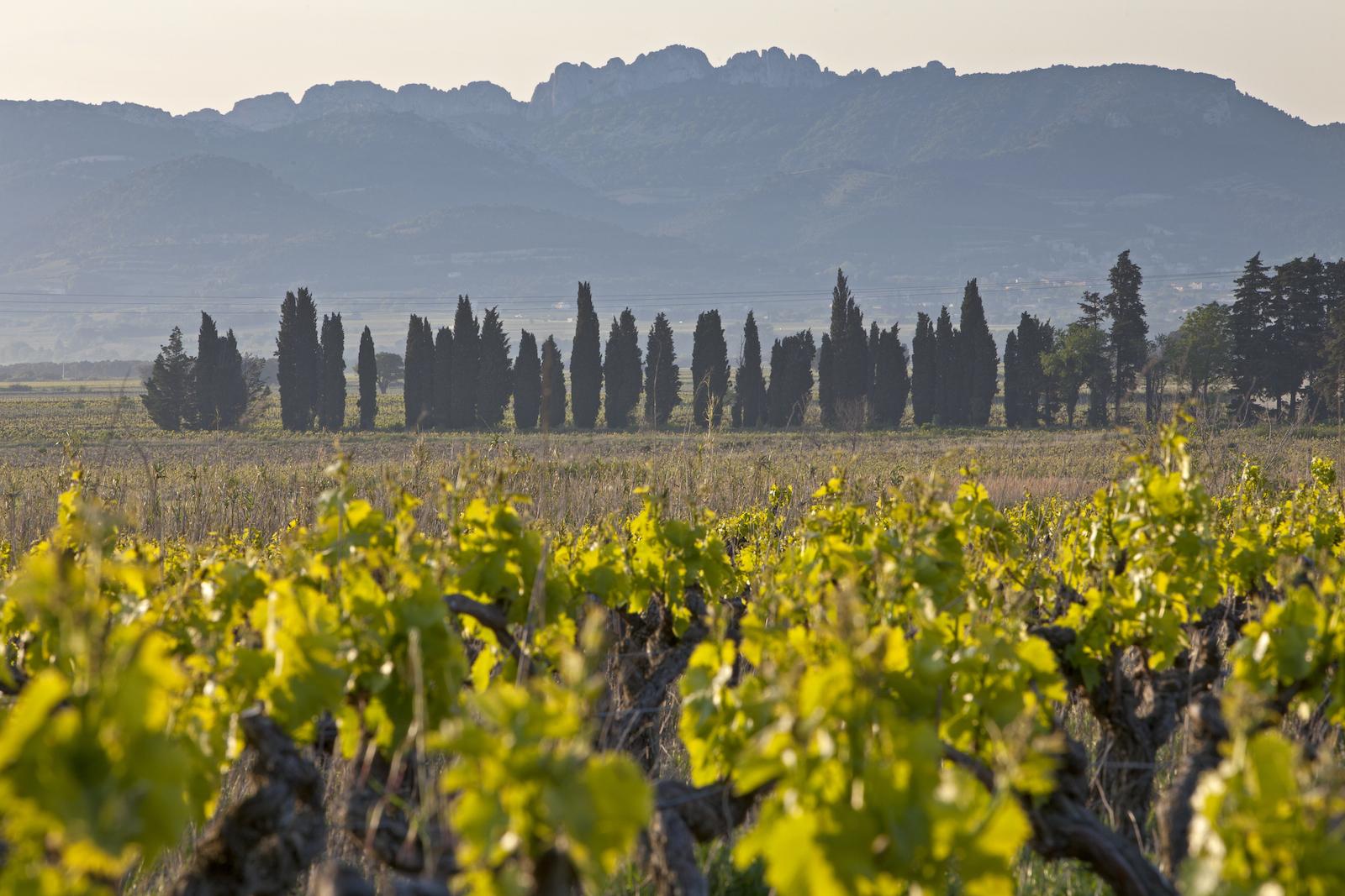 Provence Cotes-du-Rhone