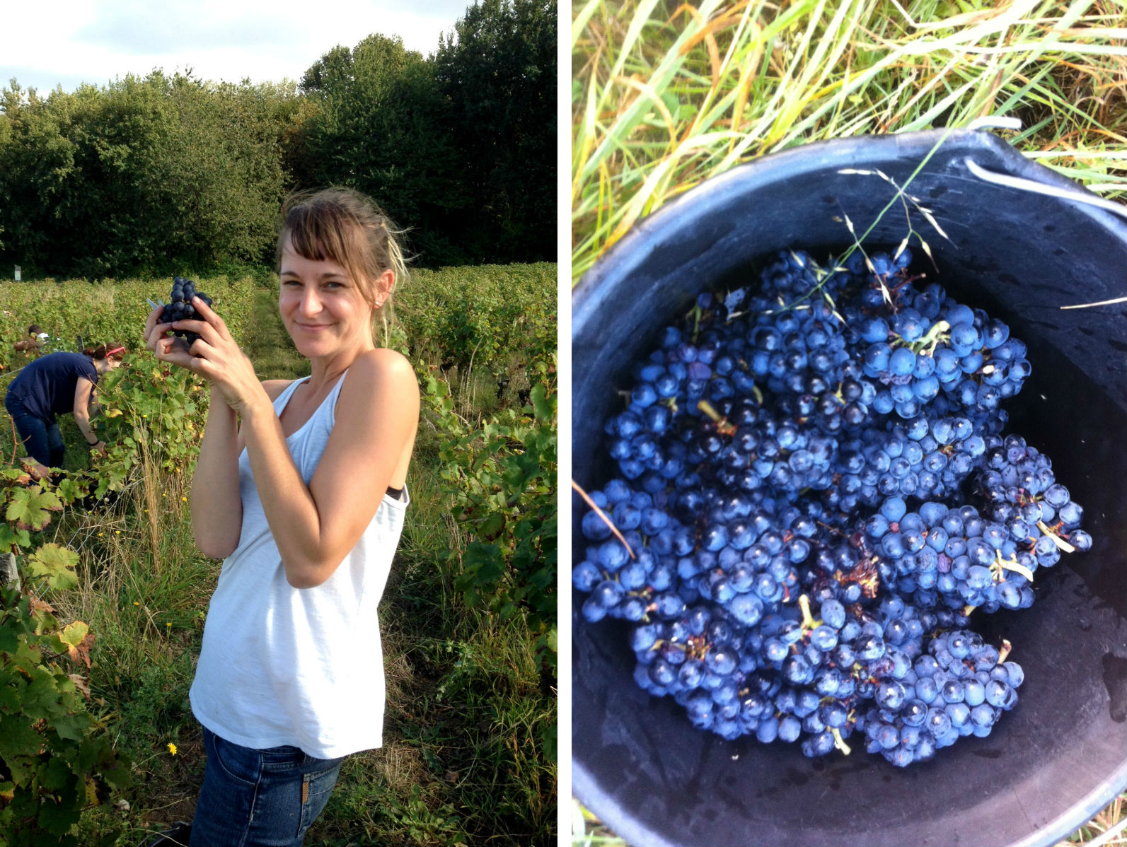 HiP Paris blog. Experiencing the wine harvest in France. Fun (but backbreaking!) work.