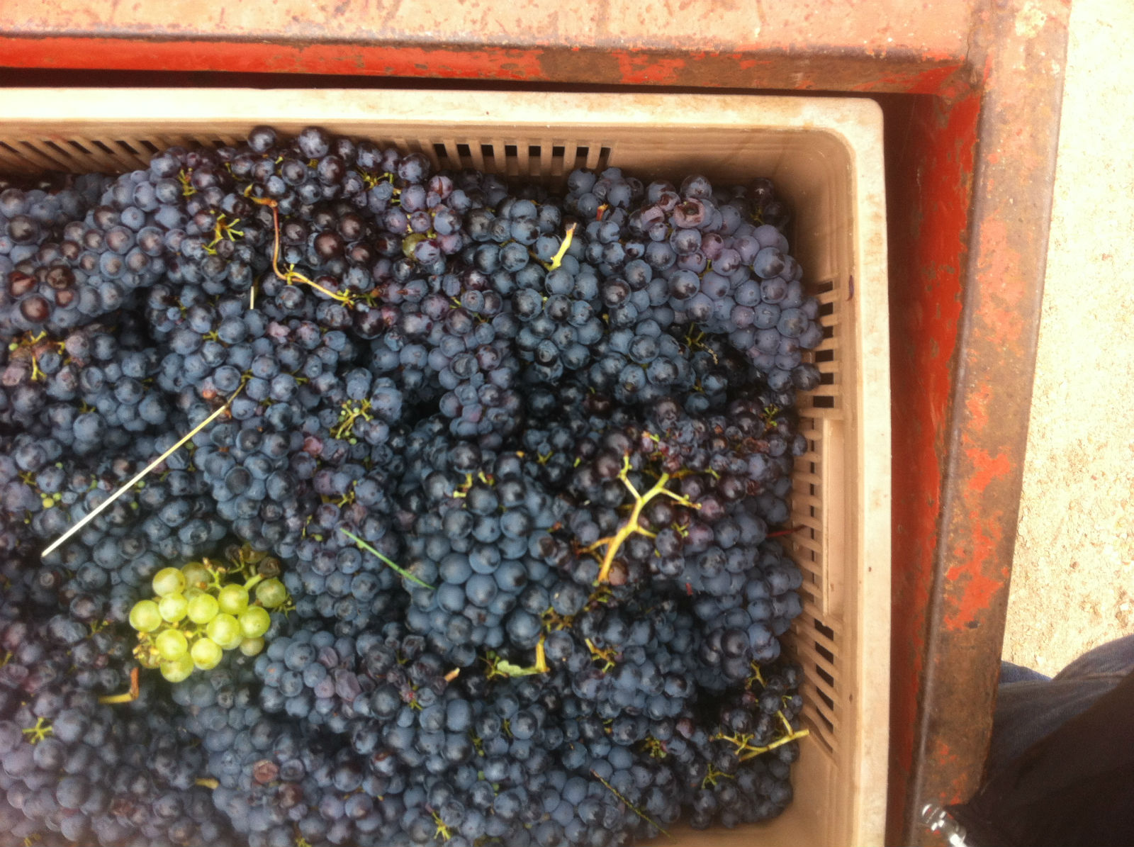 HiP Paris blog. Experiencing the wine harvest in France. Dedication to the craft results in the best grapes.