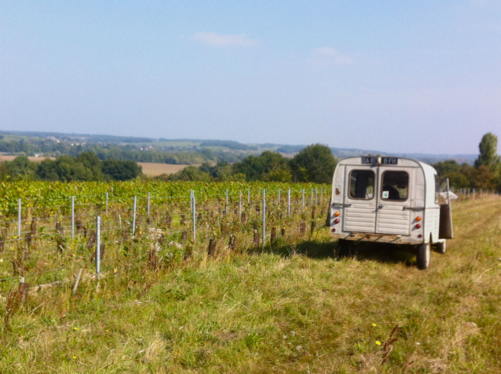 HiP Paris blog. Experiencing the wine harvest in France. A hands-on French experience.