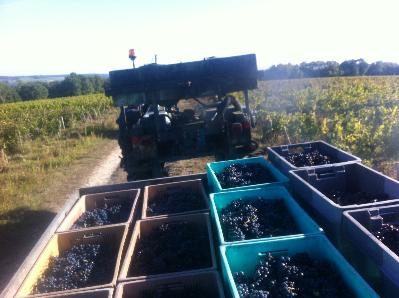 HiP Paris blog. Experiencing the wine harvest in France. The spoils of early fall in French wine country.