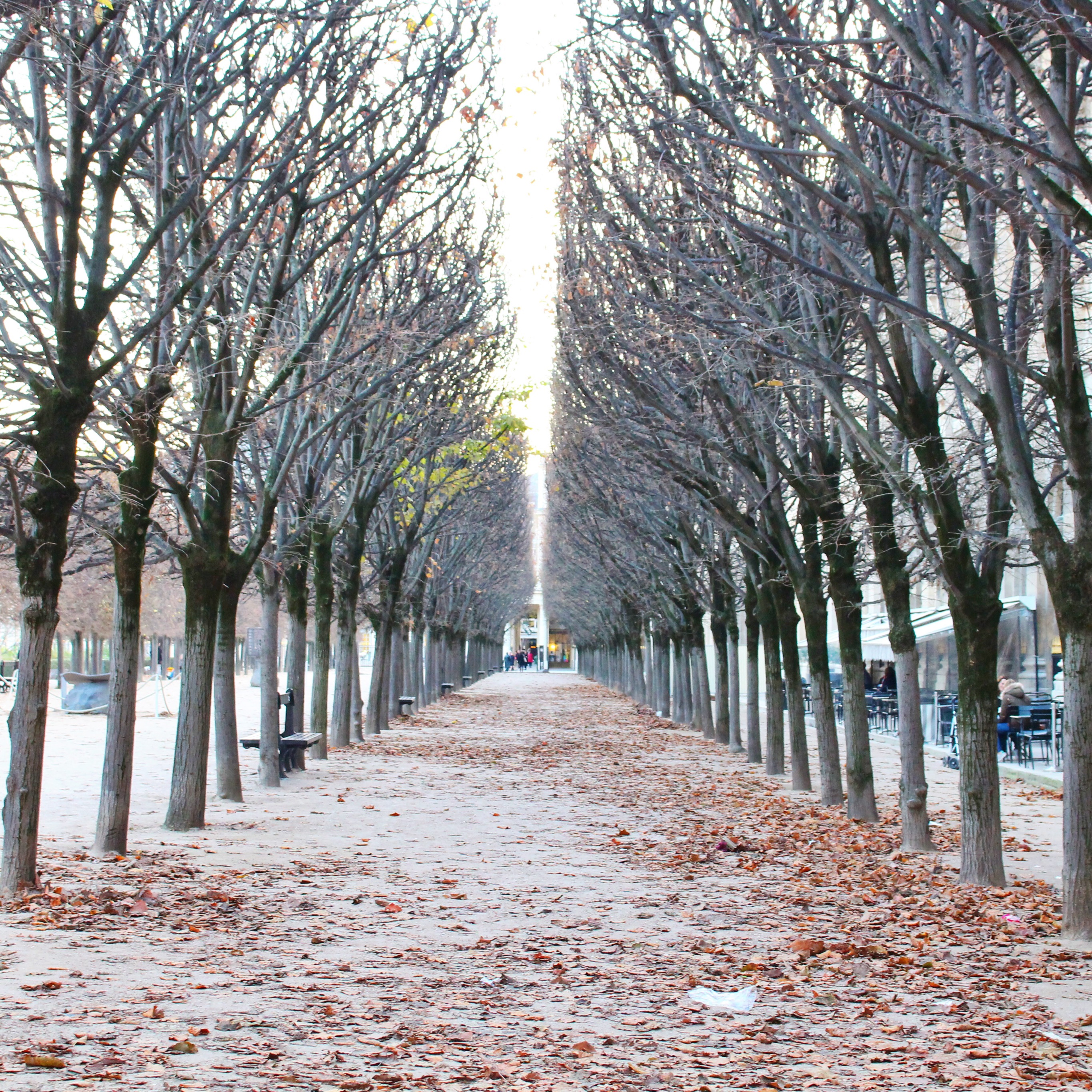 Falling leaves at the Palais Royal. Interested in an internship with HiP Paris Blog? Learn more at http://haveninparis.com/careers.php.