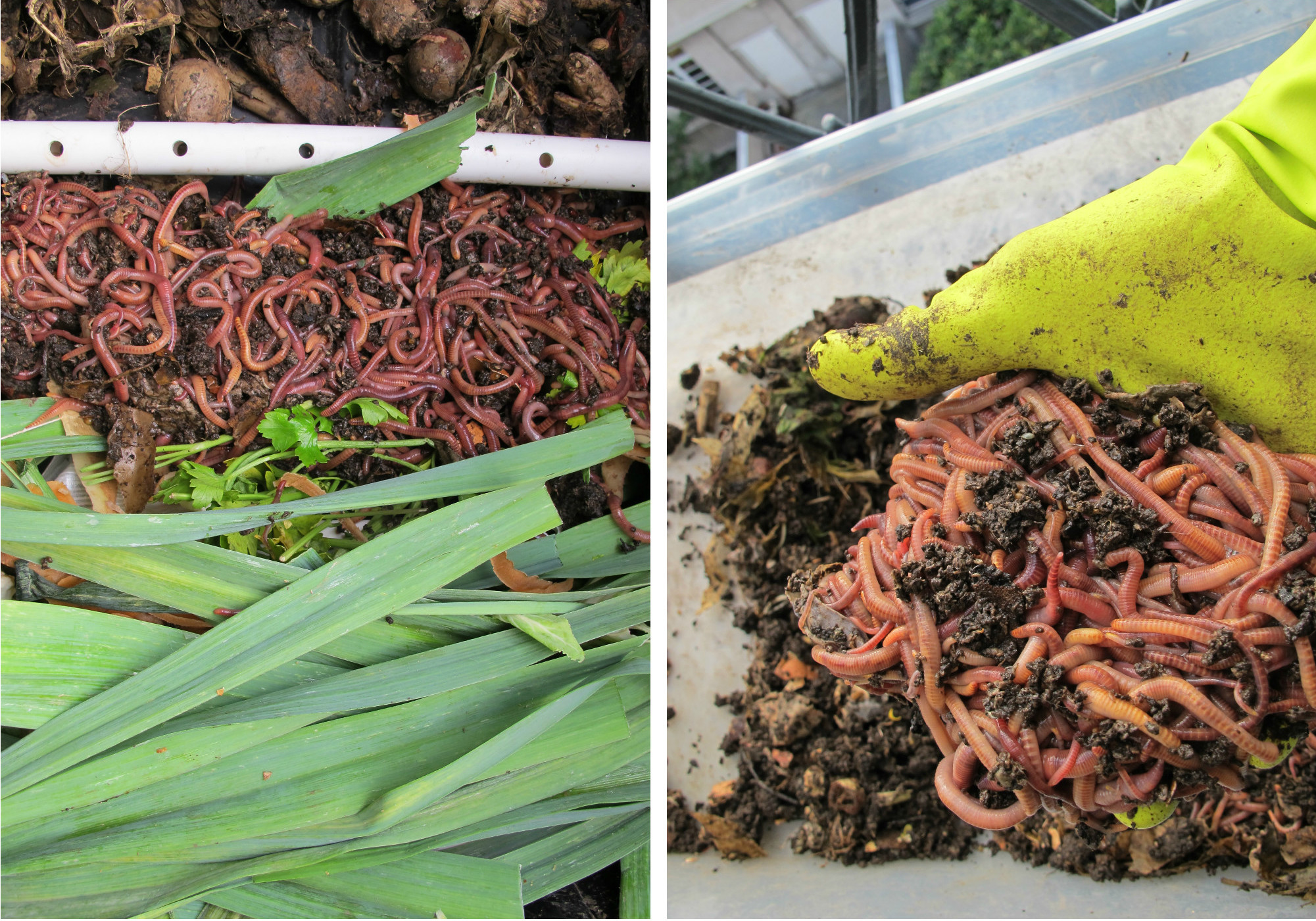 Composting in Paris