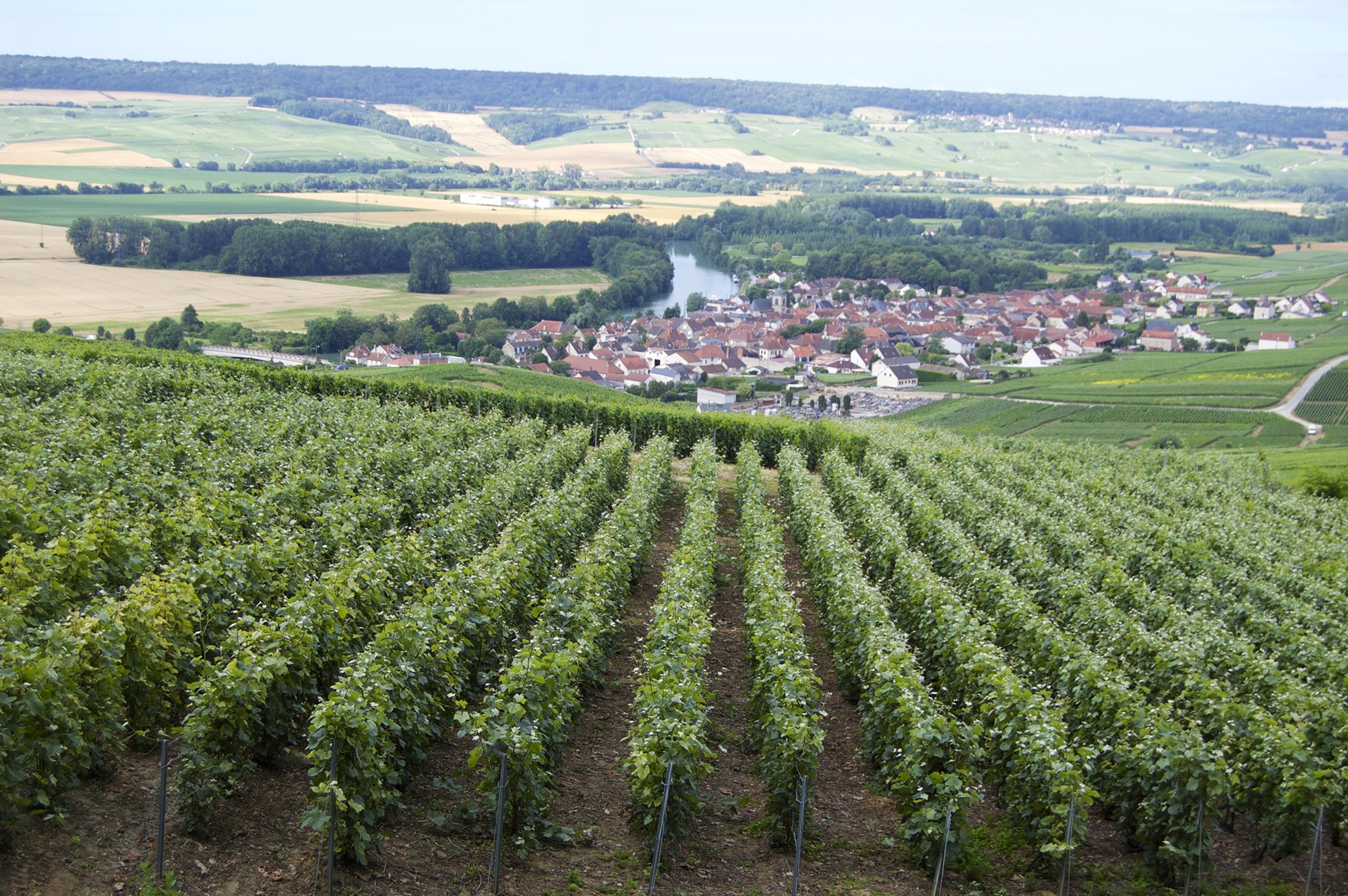 Champagne, Tasty Side to Life Tours