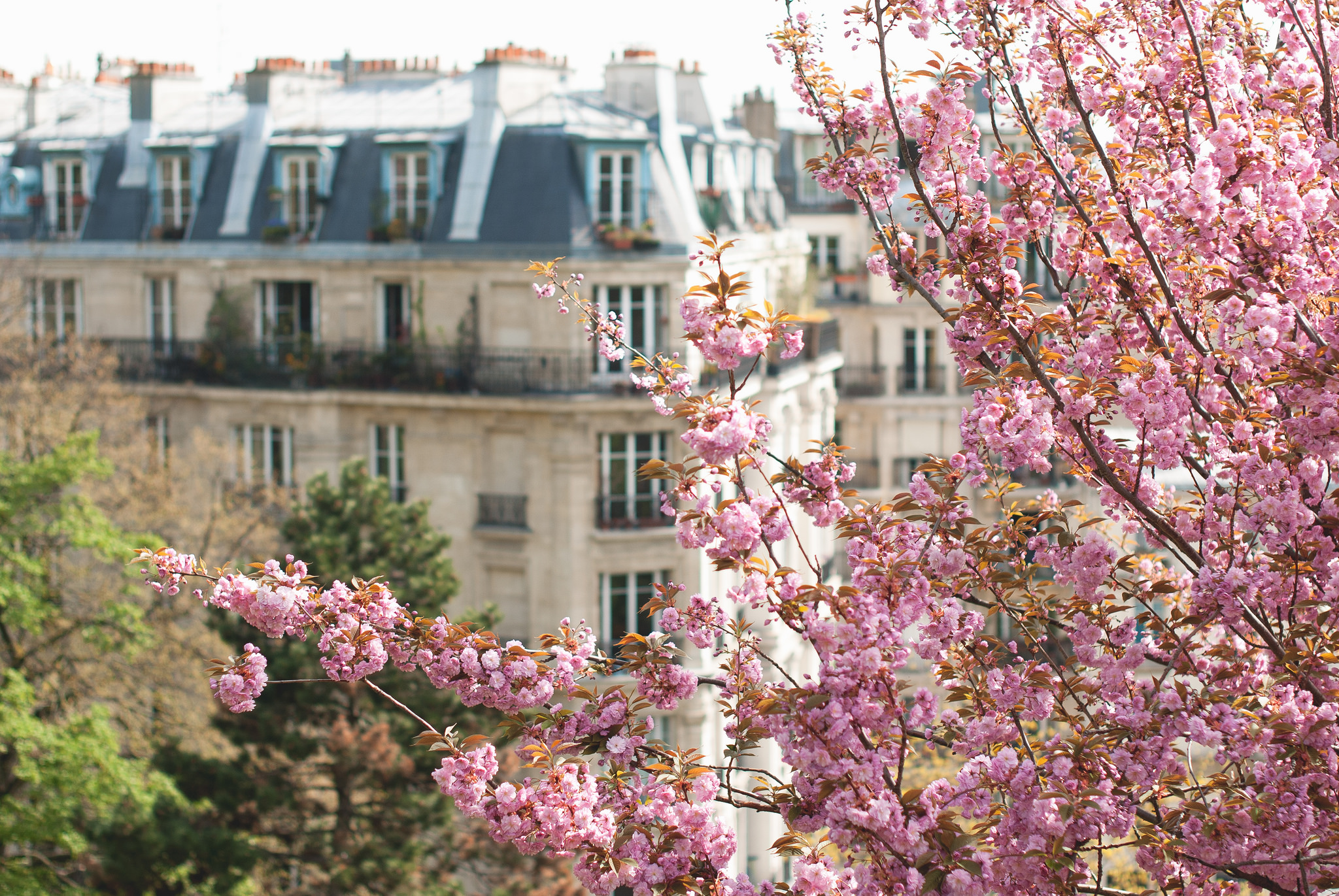Paris in April is the best time to visit as it's sunny and the city's trees are in full bloom.